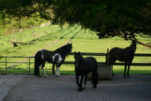 paardenhouders1.jpg